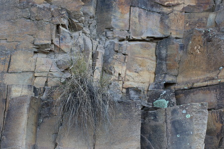 intractable: A small green plant grows from a crack in a cliff face