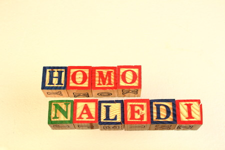 jargon: The term homo naledi visually displayed using colorful wooden toy blocks Stock Photo