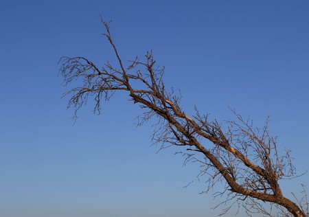 Still life - a dry branch against a clear blue winter sky
