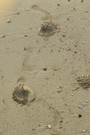 Human footprints in the wet sand on the beach with copy space