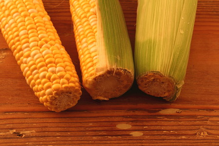Three cobs of corn in different stages of being peeled on a wood surface with copy space Stock Photo