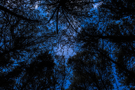 Dark trees silhouetted against a stormy sky seen from below Stock Photo