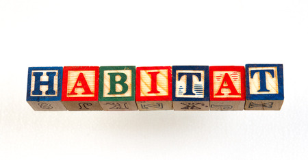 The term habitat visually displayed on a white background using colorful wooden toy blocks image with copy space in landscape format Stockfoto