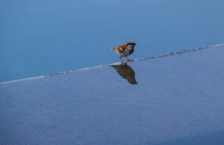 Small bird perched on a ledge between two bodies of water - concept strategy - image with copy space in landscape format