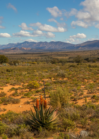 Karoo winter landscape with aloes in the Willowmore district South Africa Imagens