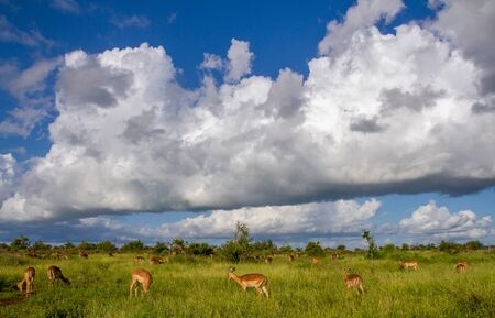 Clouds building up over an African landscape with wildlife image in horizontal format