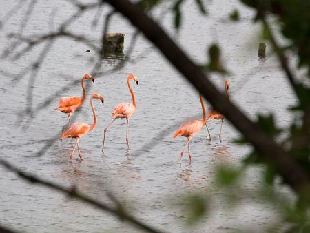 morass: Flamingo at dawn