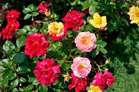 in charleston: Rose Charleston