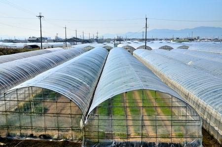 Plastic greenhouse 스톡 콘텐츠