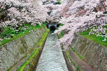 hydrophobic: Spring Lake Biwa