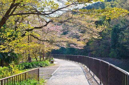 hydrophobic: Kyoto Yamashina hydrophobic Higashiyama natural green jogging track