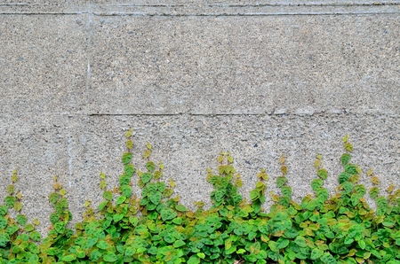 adaptive: Concrete wall and leaves Stock Photo