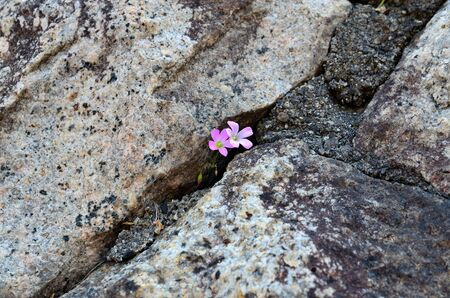 force of the nature: Flowers bloom on the Rocky