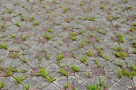 weed block: Cobblestone