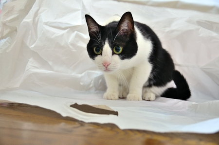 horsing around: The cat into the shopping bag Stock Photo
