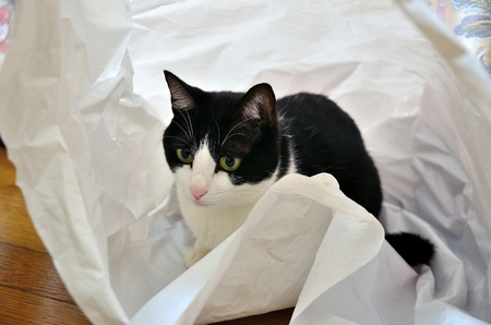 The cat into the shopping bag Stock Photo