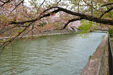 hydrophobic: Hydrophobic in Okazaki