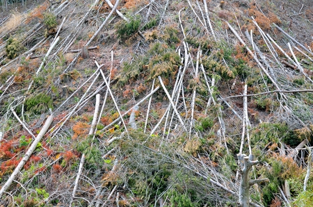 logging industry: Logging