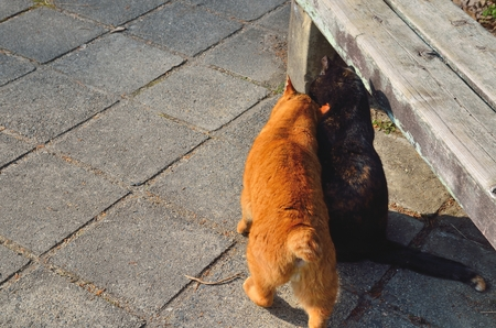 feral: Feral cats