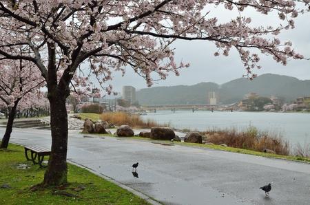 봄의 세타가와