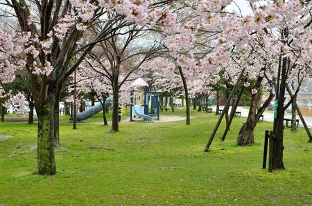 봄의 카라 하시 공원