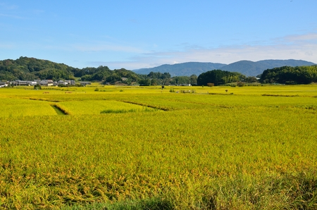 Asuka village in Nara Prefecture 스톡 콘텐츠