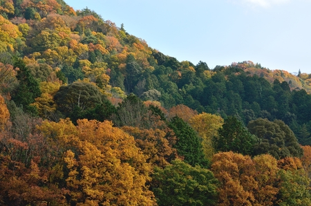 Autumn landscapes