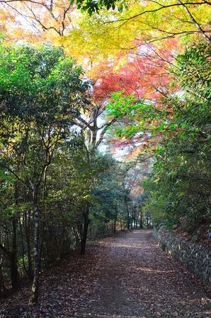 Daikichiyama in Kyoto 写真素材 - 122824933