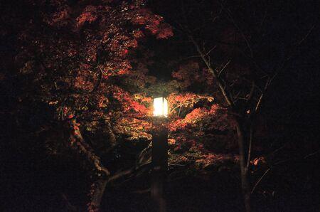 Autumn leaves lit up