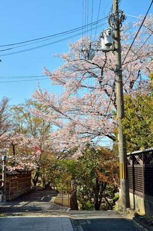 Kyoto Trail and Cherry Blossoms