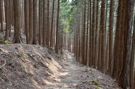 The mountain trail of Mt. Hiei in Kyoto