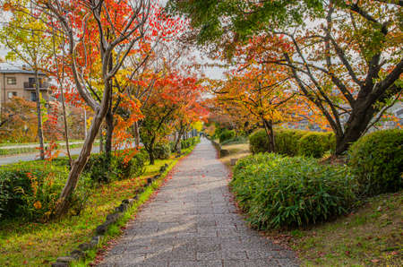 A promenade along the Kamogawa River in Kyoto Stock Photo