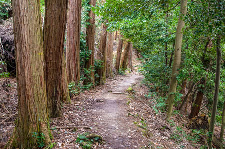 Kyoto's UpperCase Mountain Trail 스톡 콘텐츠