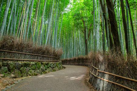 Bamboo Forest Road in Arashiyama, Kyoto