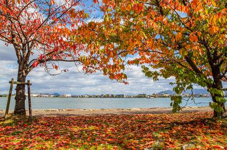 Lake Biwa and autumn leaves in Shiga Prefecture