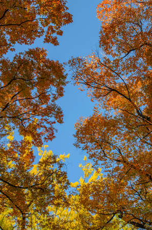 Red leaves and blue sky 스톡 콘텐츠