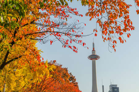 Kyoto Tower and Autumn Leaves