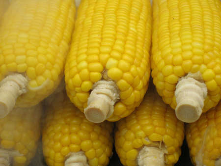Rows of maize with steam coming out from the maize