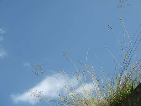 Simple grass against blue sky with lots of copyspace
