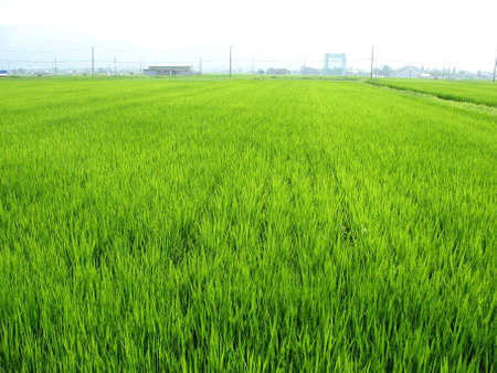 The typical look of a rural countryside Japanese scene Stock Photo