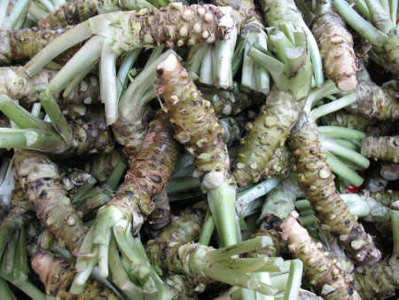 Lots of wasabi root in the background. A typical Japanese herb.