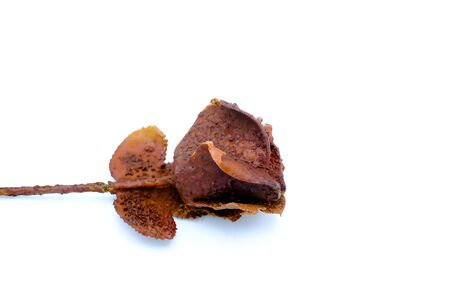 petrified rose, typical souvenir of the Karlovy Vary town in Czech repubic. Isolated in the white background Stock Photo