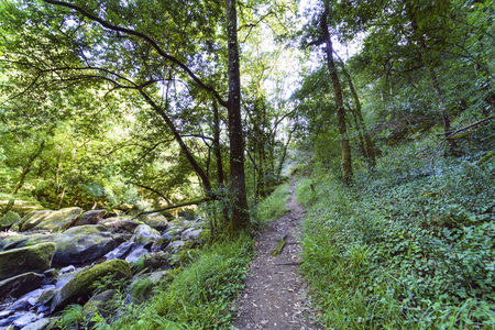 path along the edge of the mountain river called Chelo covered with rocks, surrounded by typical green and exuberant Atlantic vegetation in Galicia (Spain). Imagens