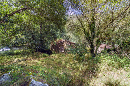 Small rural house in a forest with trees covered with ivy and next to a river, in Galicia, Spain 写真素材