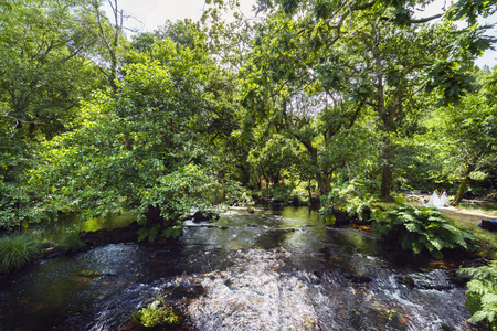Mountain river called Anllons with a strong current and shores covered with vegetation, in Galicia, Spain 写真素材