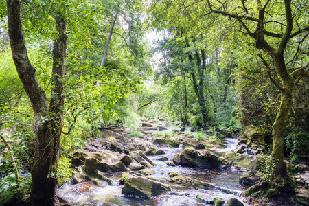 Riverbed full of stones from the river Anllons with banks full of oaks and vegetation in a typical atlantic forest in Galicia, Spain 写真素材