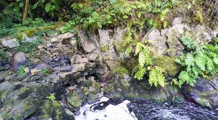 Detail of a small dam surrounded by rocks and very green vegetation composed, above all, of ferns in a mountain river called Anllons in Galicia, Spain