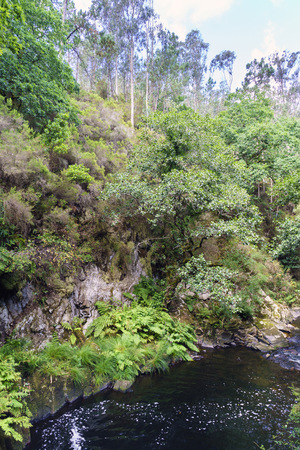Small pond surrounded by rocks and very green vegetation composed, above all, of ferns in a mountain river called Anllons in Galicia, Spain