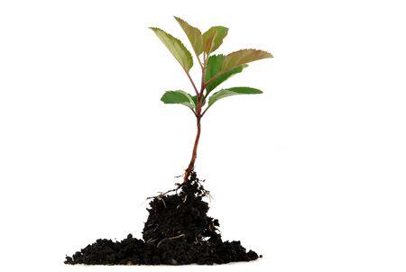 Tender seedling Stock Photo