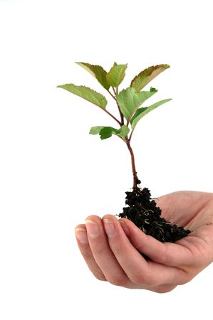A tender seedling in front of white background Stock Photo - 4821542